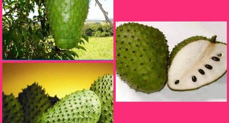 Pati Durian Belanda