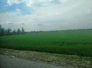 Homestay D' Sawah Padi Tanjong Karang