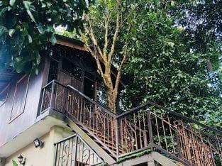 Tree House di kawasan desa